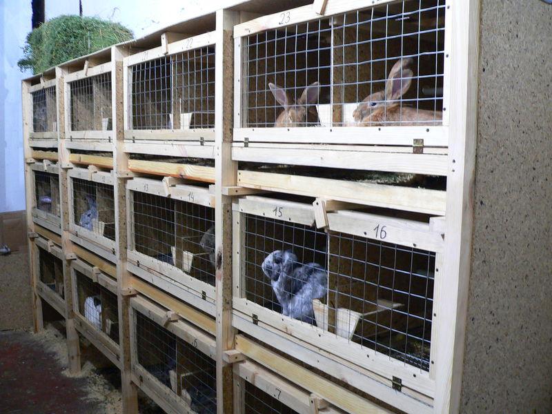 Клетка для кроликов своими руками пошаговая инструкция